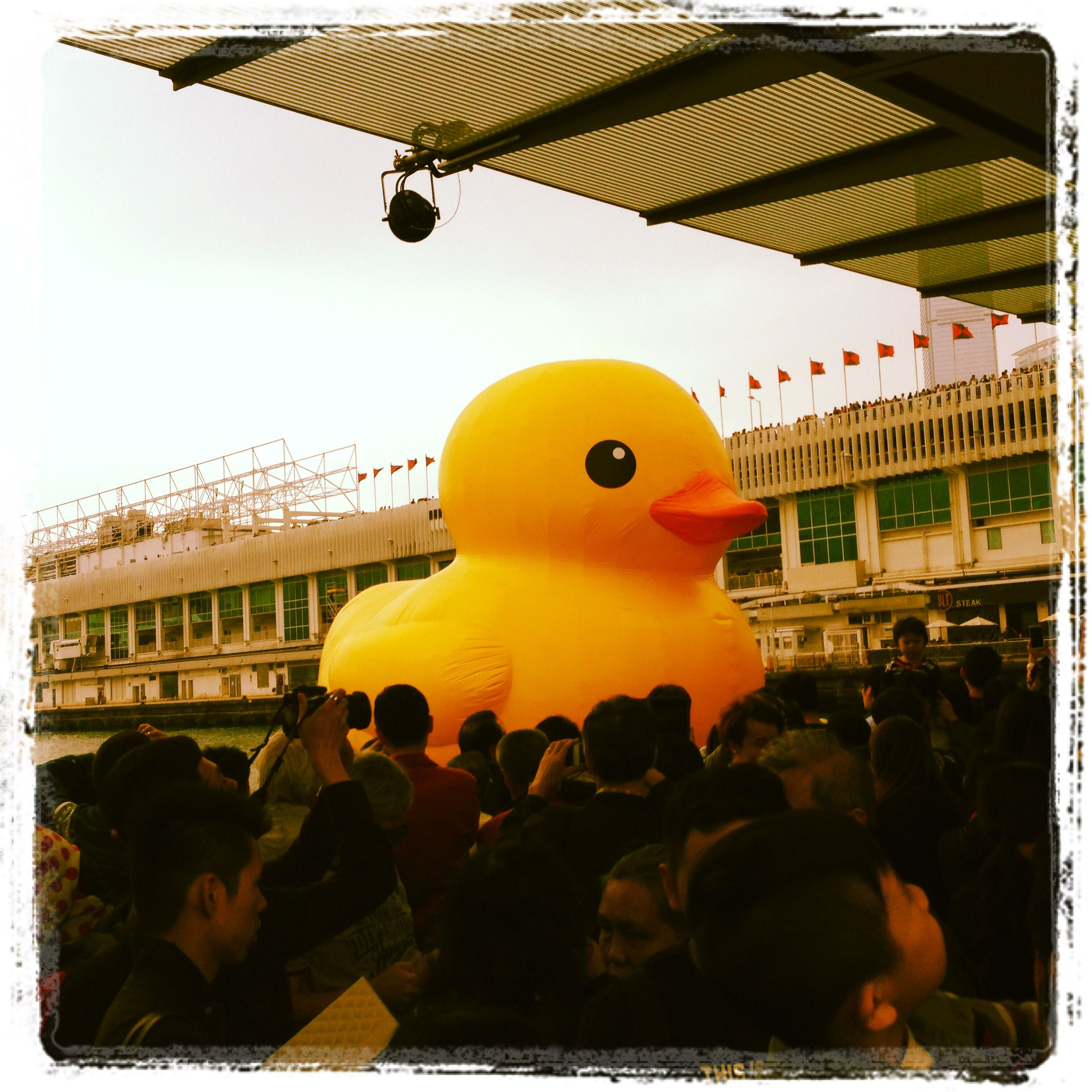 Giant duck in the Victoria Harbour, Hong Kong