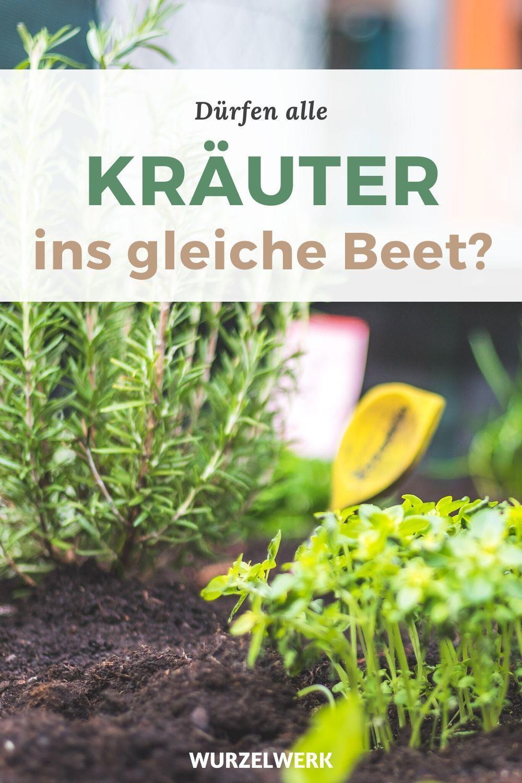 Photo of Kräuter pflanzen: Der perfekte Standort mit dem 3-Zonen-Beet!
