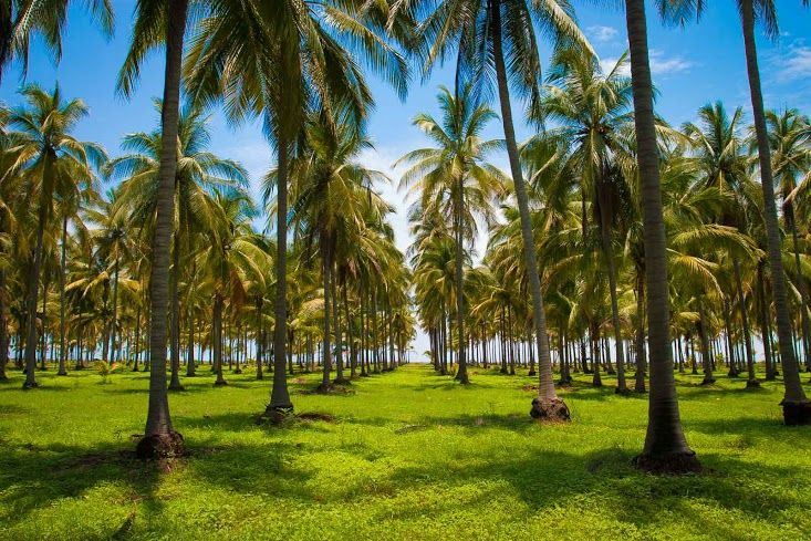 Playa Las Tortugas, Riviera Nayarit, Mexico Time for