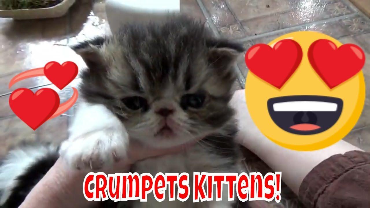 Crumpets Kittens Turned 3 Weeks Old Kittens Kitten Care Pets