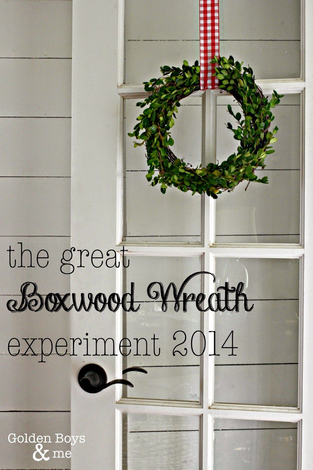 My Boxwood Wreath Experiment Boxwood Wreath Wreaths Box Wood Shrub