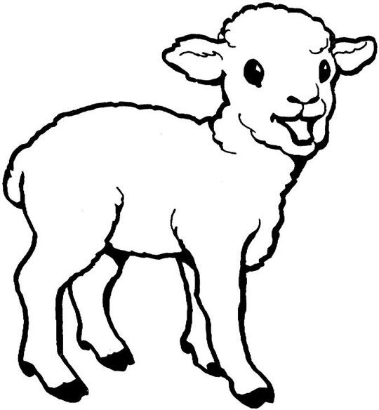 Little Lamb Coloring Page From Domestic Sheep Category Select 27278 Printable Crafts Of Cartoons Nature Animals Bible And Many More