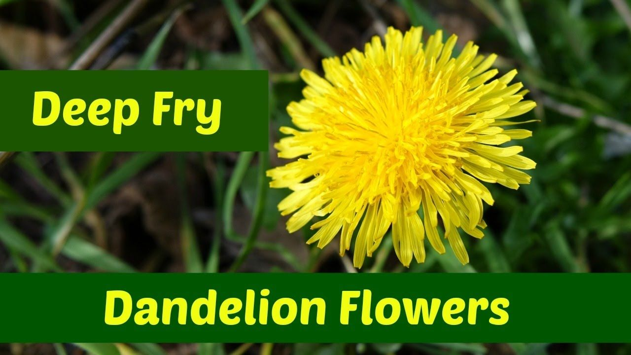 Dandelion Flowers Three Ways To Deep Fry Dandelion Flowers Youtube In 2020 Dandelion Flower Dandelion Deep Fried
