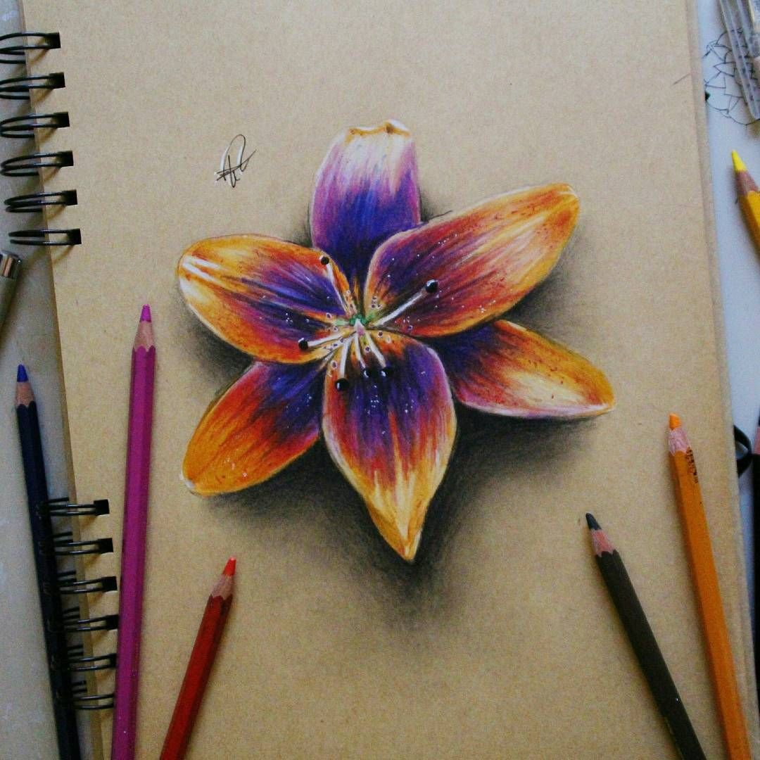 A Flower In Color Pencil Art Made By Elia Pellegrini From Italy Elia Pelle Color Pen Flower Drawing Pencil Drawings Of Flowers Realistic Flower Drawing