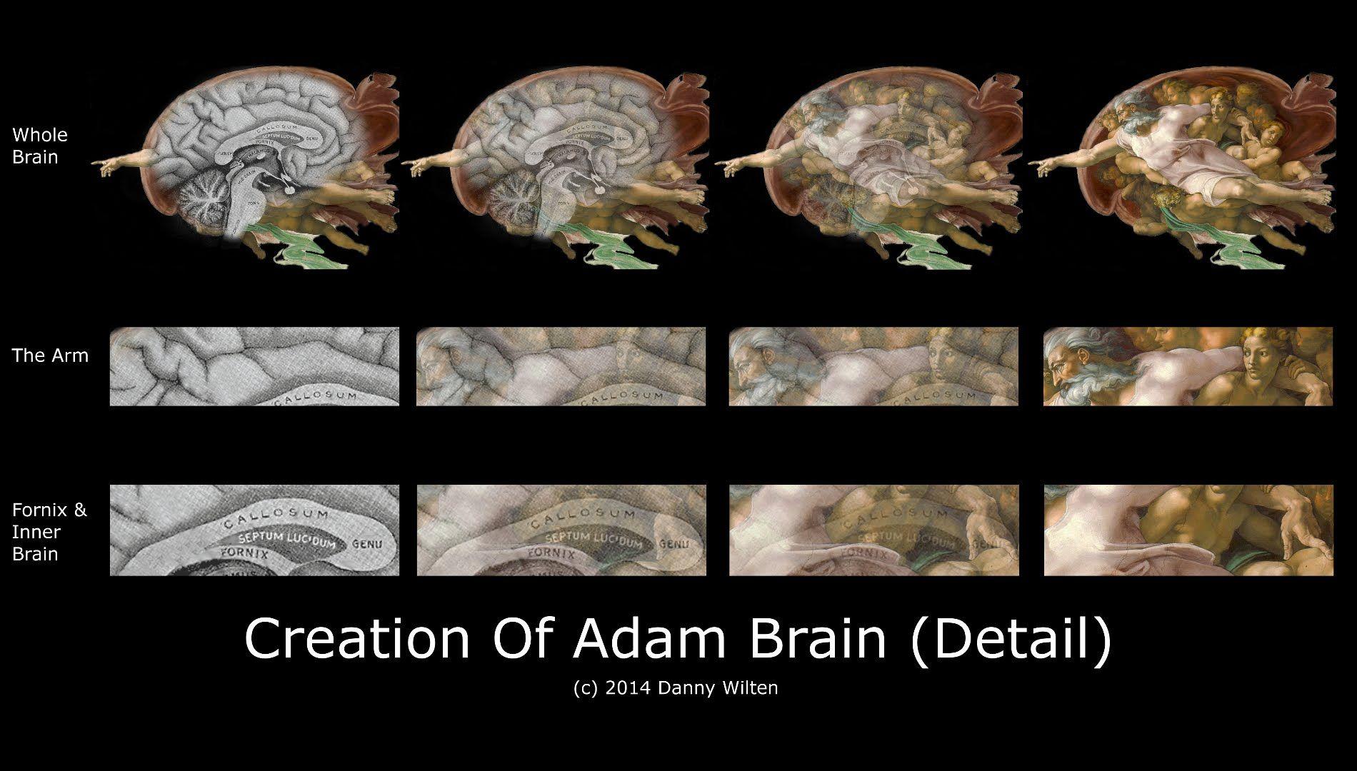 Danny Wilten - Creation Of Adam Brain Detail Using Grey\'s Anatomy ...