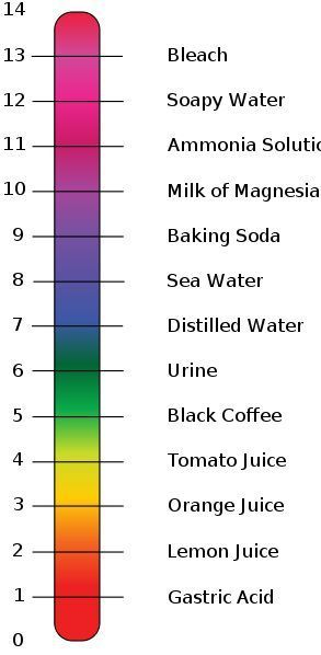 PH Chart for acids and bases OMG just went over acids and bases - sample urine color chart