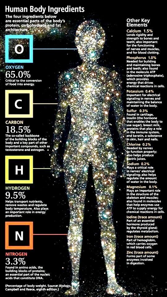 Human Body Elements.  #humanbody  #bodyelements  #bodycomposition