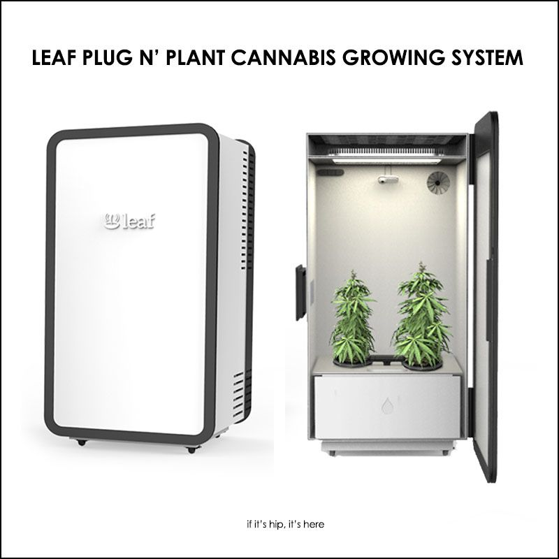 high tech plug n 39 plant cannabis home growing system leaf dope design pinterest cannabis. Black Bedroom Furniture Sets. Home Design Ideas