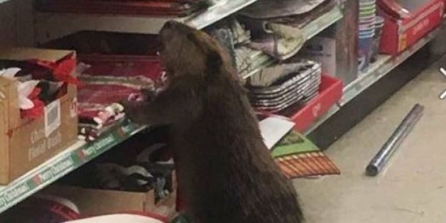Beaver Who Ravaged Dollar Store Christmas Decorations Is All Of Us - dollar general christmas decorations