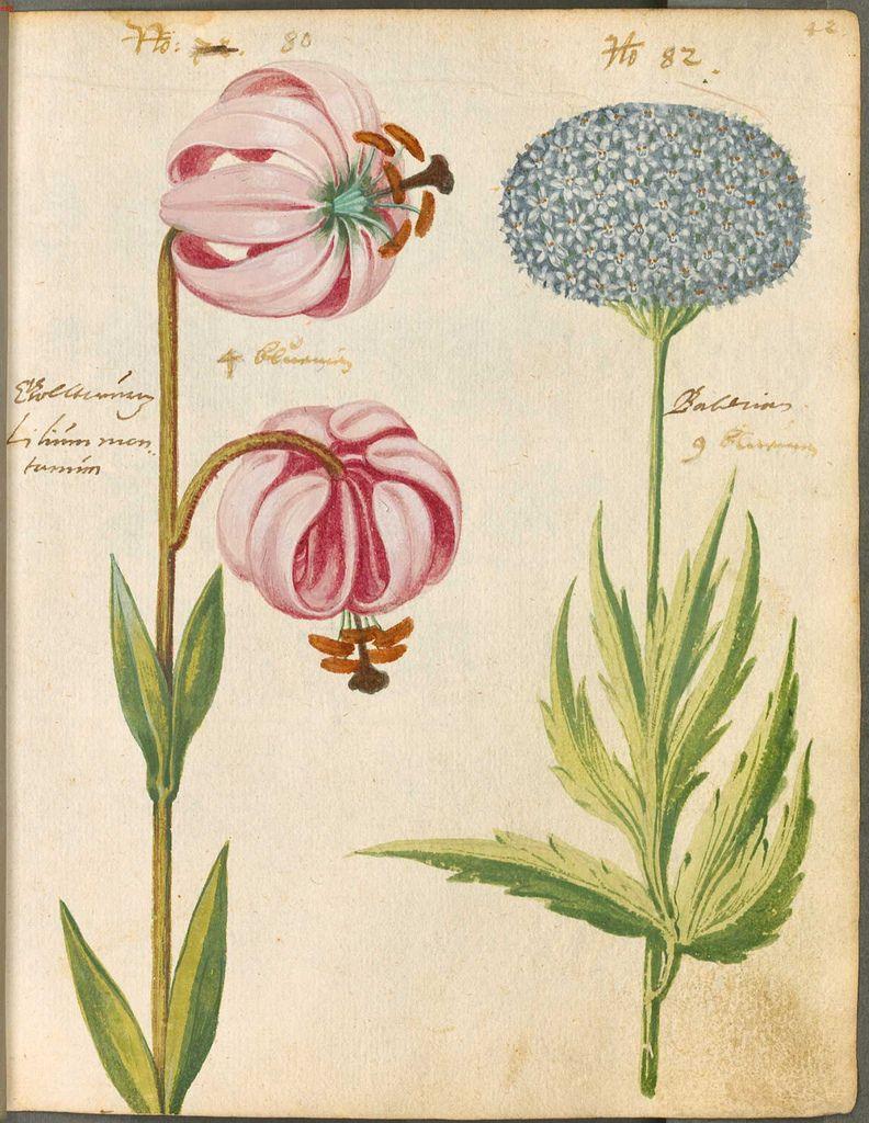 пышные ботаническая энциклопедия растений с иллюстрациями советы, как сегодня