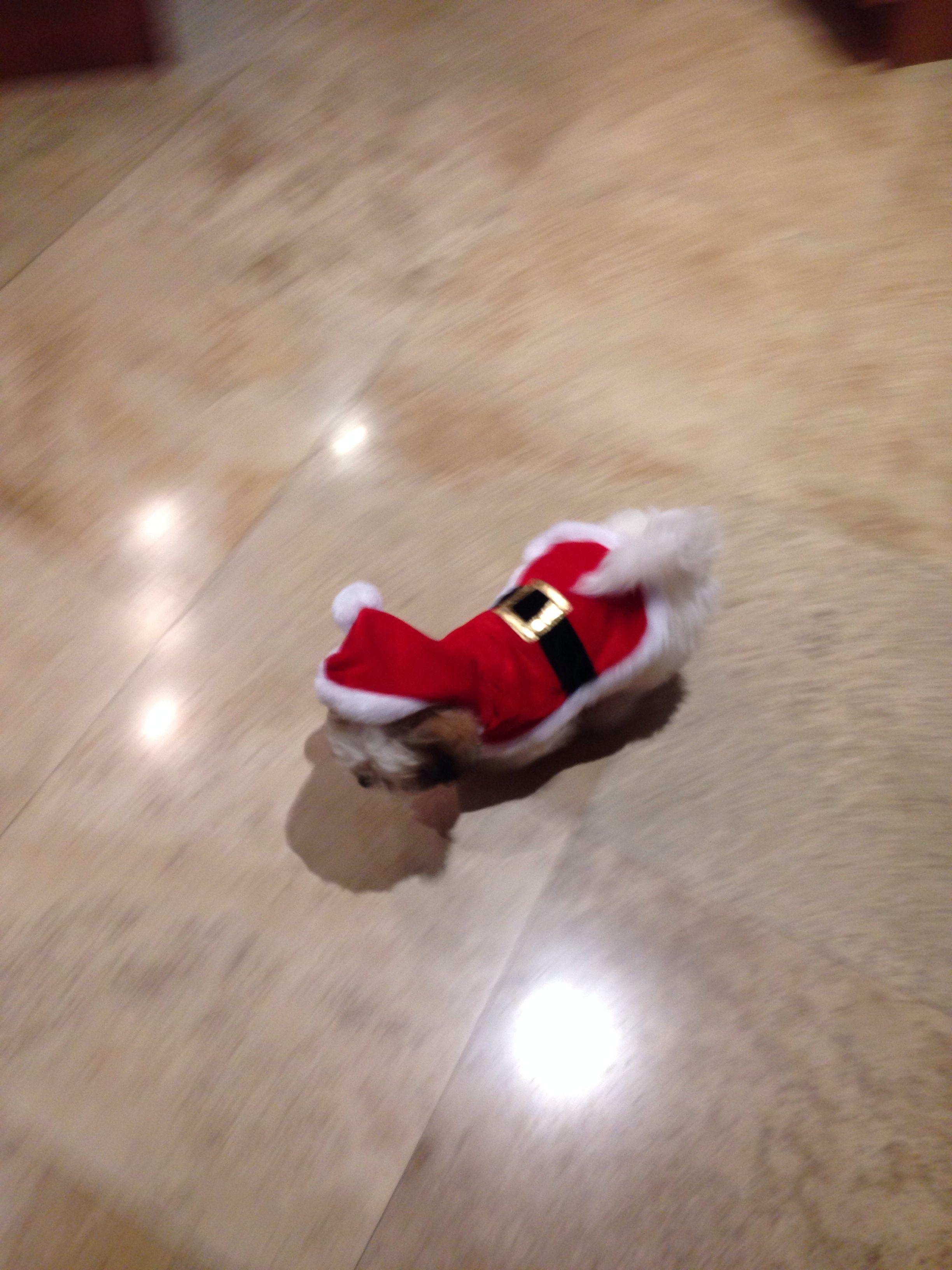 Henry dressed as Santa