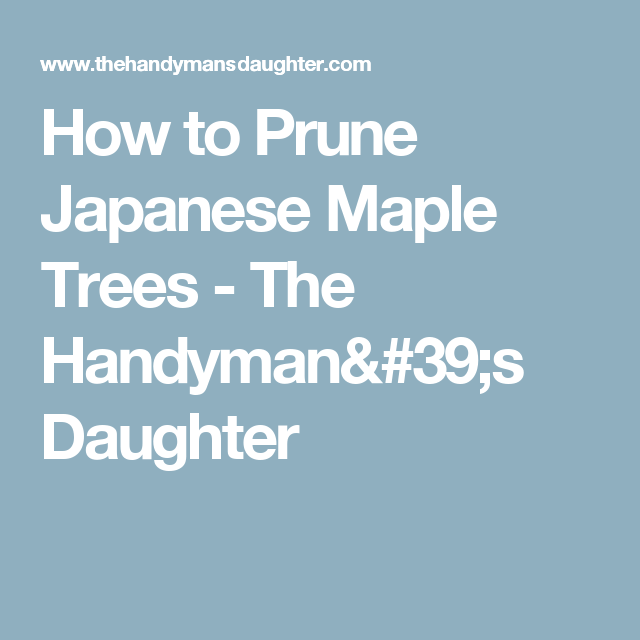 How to Prune Japanese Maple Trees - The Handyman's Daughter
