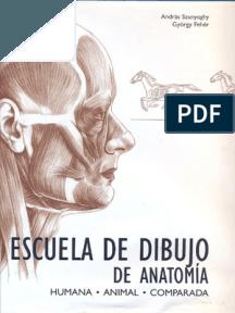 Dibujo De Anatomia Libros De Dibujo Pdf Libros De Anatomia Anatomia Artistica