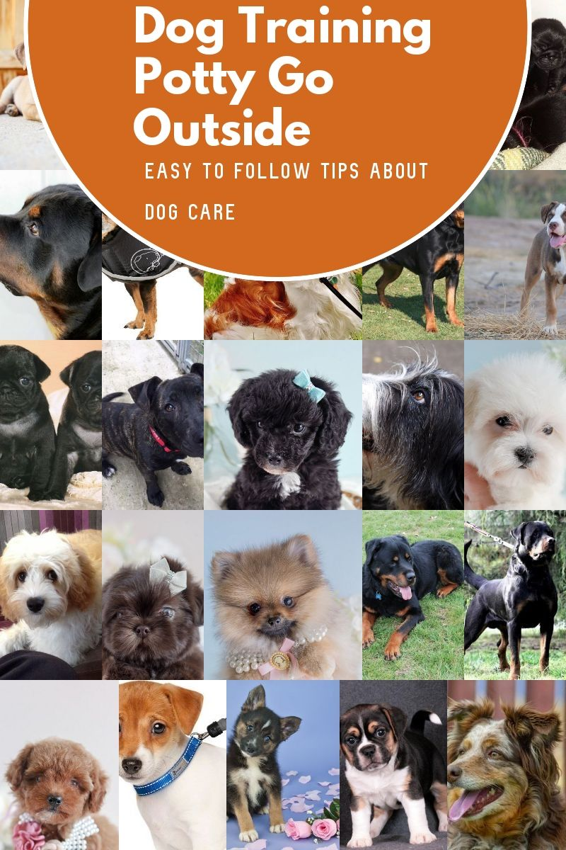 Great Dog Training Potty Go Outside Guidelines That Can Help Any Pet Owner You Can Find Out More Detail Dog Potty Training Dog Training House Training Dogs