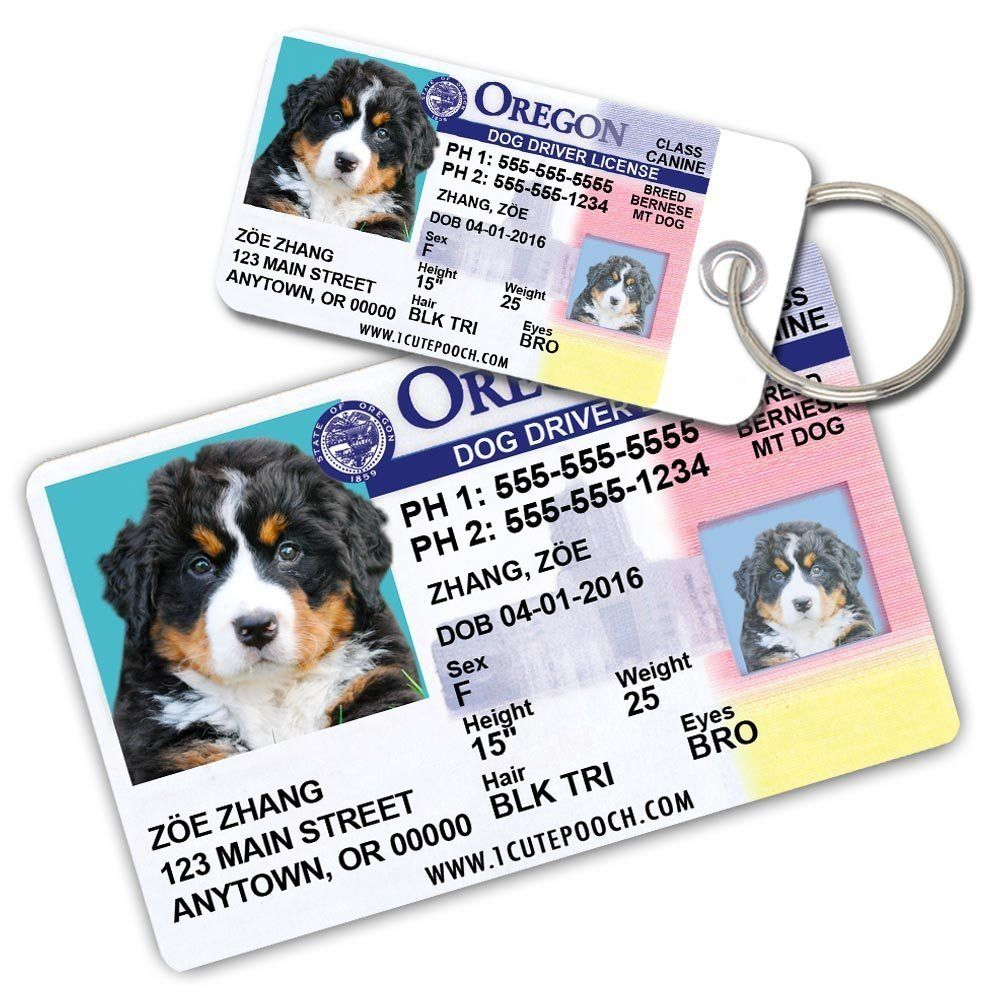 Graphics and More Chrome Plated Metal Small Pet ID Dog Cat Tag Hello My Name is VA-YV