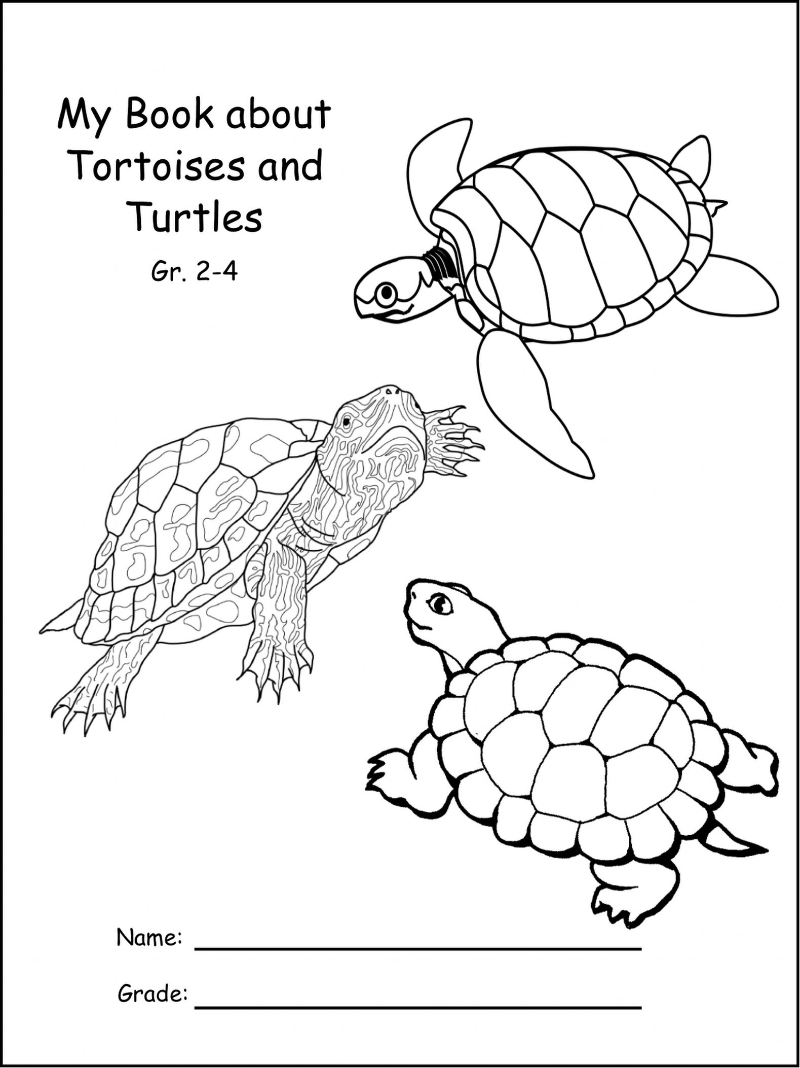 Differences Between Sea Turtles And Land Tortoises With