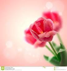 httpswwwflowerwyzcombirthdayflowersbirthdaygiftsformom