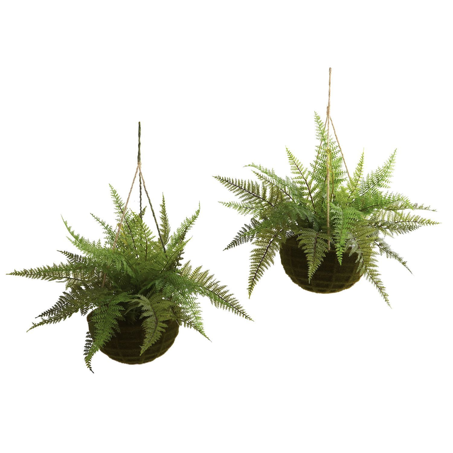 Leather Fern w/Mossy Hanging Basket (Indoor/Outdoor) (Set of 2 ...