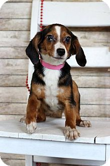 Pin By Terry Gorman On Please Take Us Home Dachshund Mix