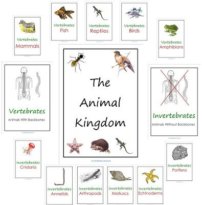 Image of: Chart Free Animal Kingdom Notebook Printables Pinterest Free Animal Kingdom Notebook Printables Homeschool Ideas Ccch