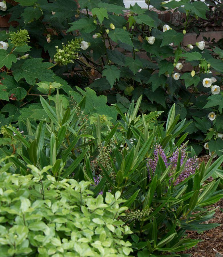 Cottage Garden California Outside InStyle Landscape Design Purple