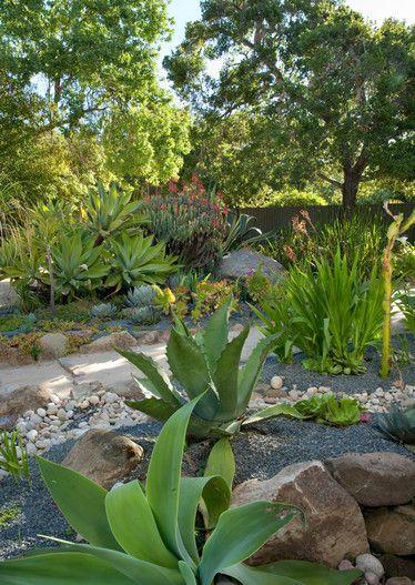 Succulent Garden No Water Landscape Xeriscape Agave