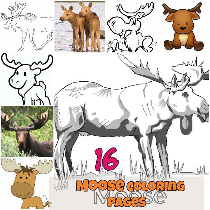 Printable Moose coloring pages for kids. Wild animal coloring ...