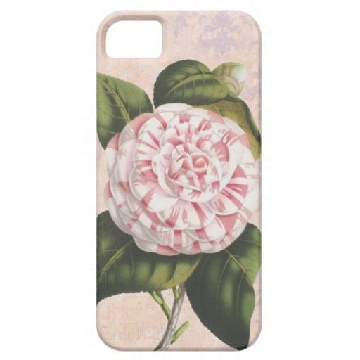 Pink and White Camellia Gardener's iPhone 5 Case