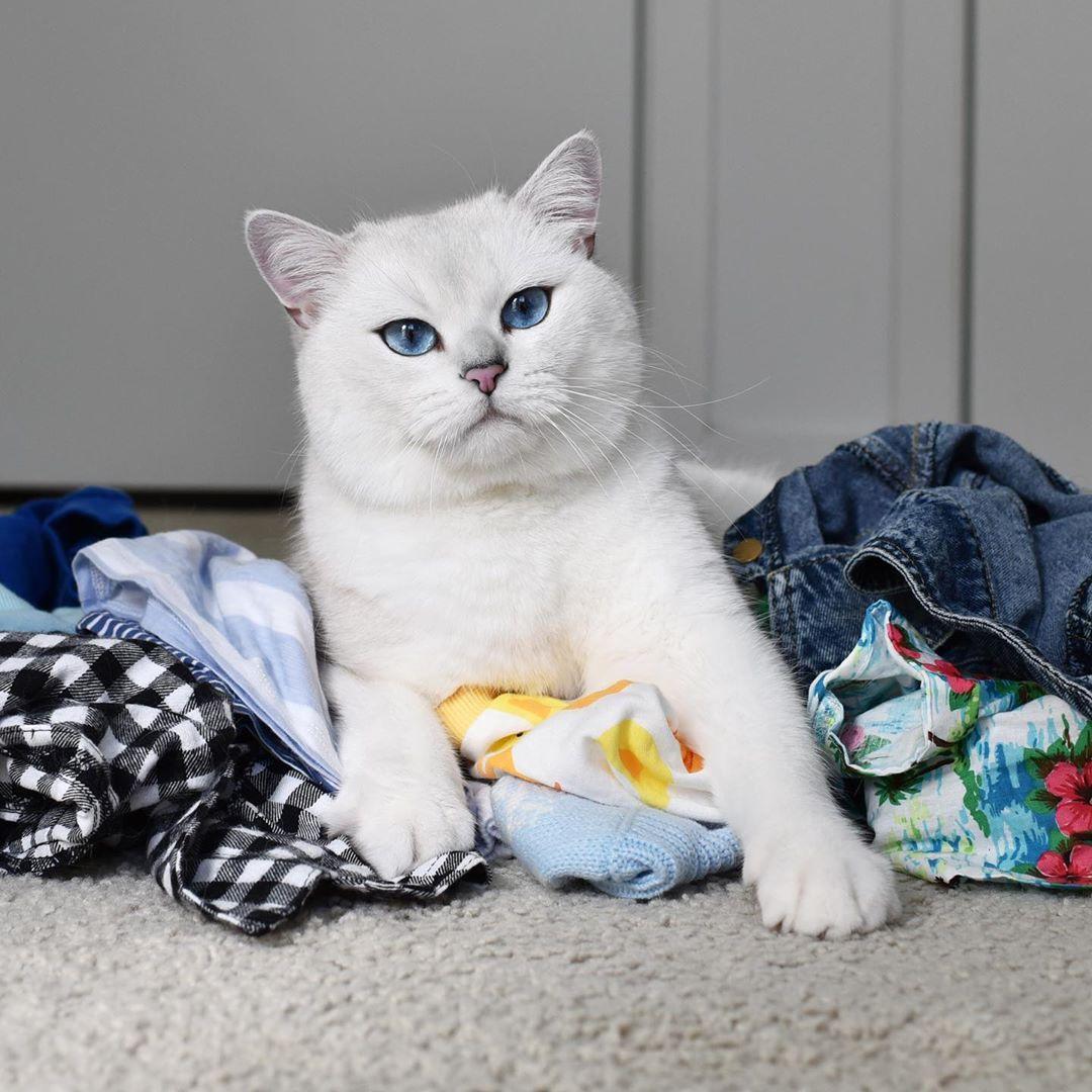Funniest Video Ever Extinct Animals Cat Day Animals