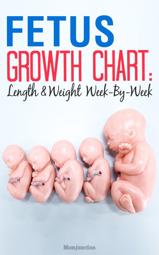 Growth Chart Fetal Length And Weight Week By Week Baby Ideas