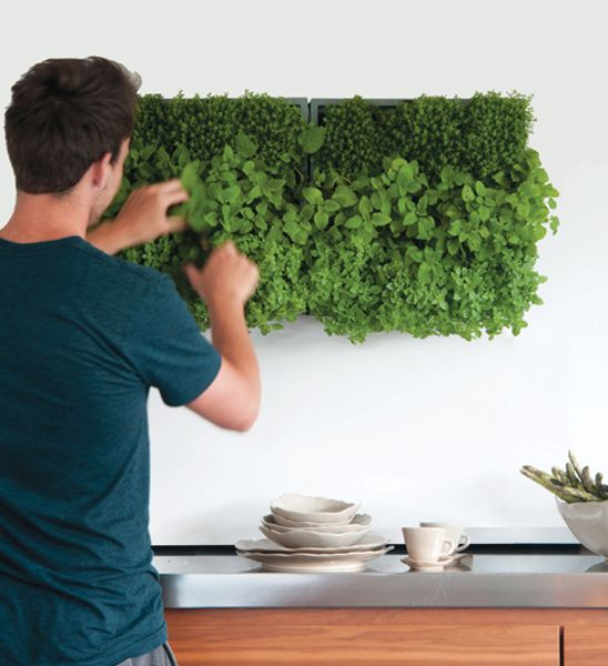 pflanzenwand karoo grau pflanzen drinnen pinterest. Black Bedroom Furniture Sets. Home Design Ideas