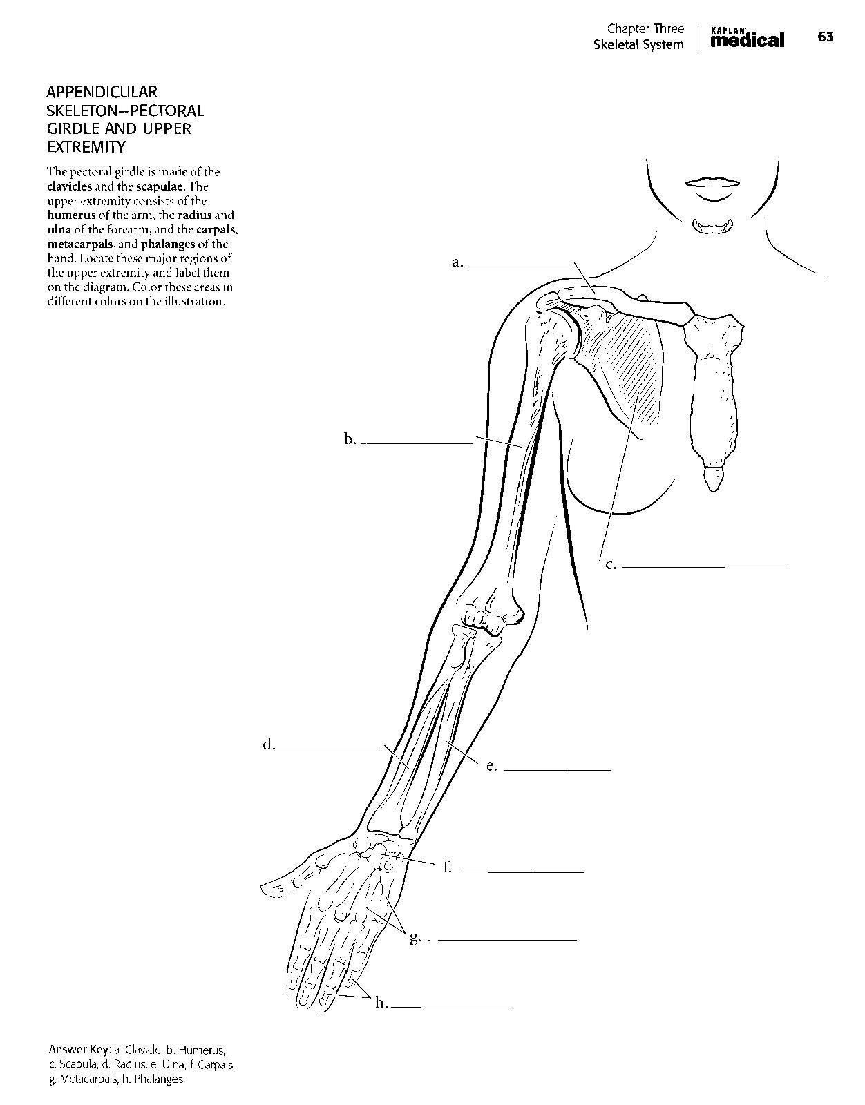 Chapter 1 The Human Body An Orientation Answers The human