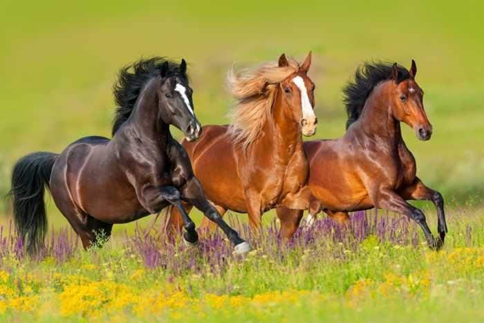 صور الخيول البرية Wild Horses Running Horses Beautiful Horses