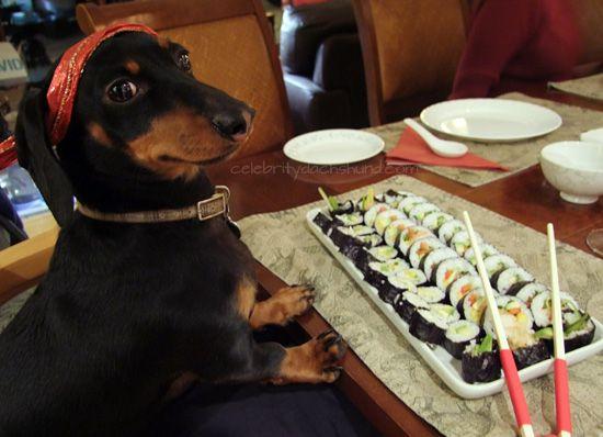 Sushi For Dogs | Crusoe Dachshund