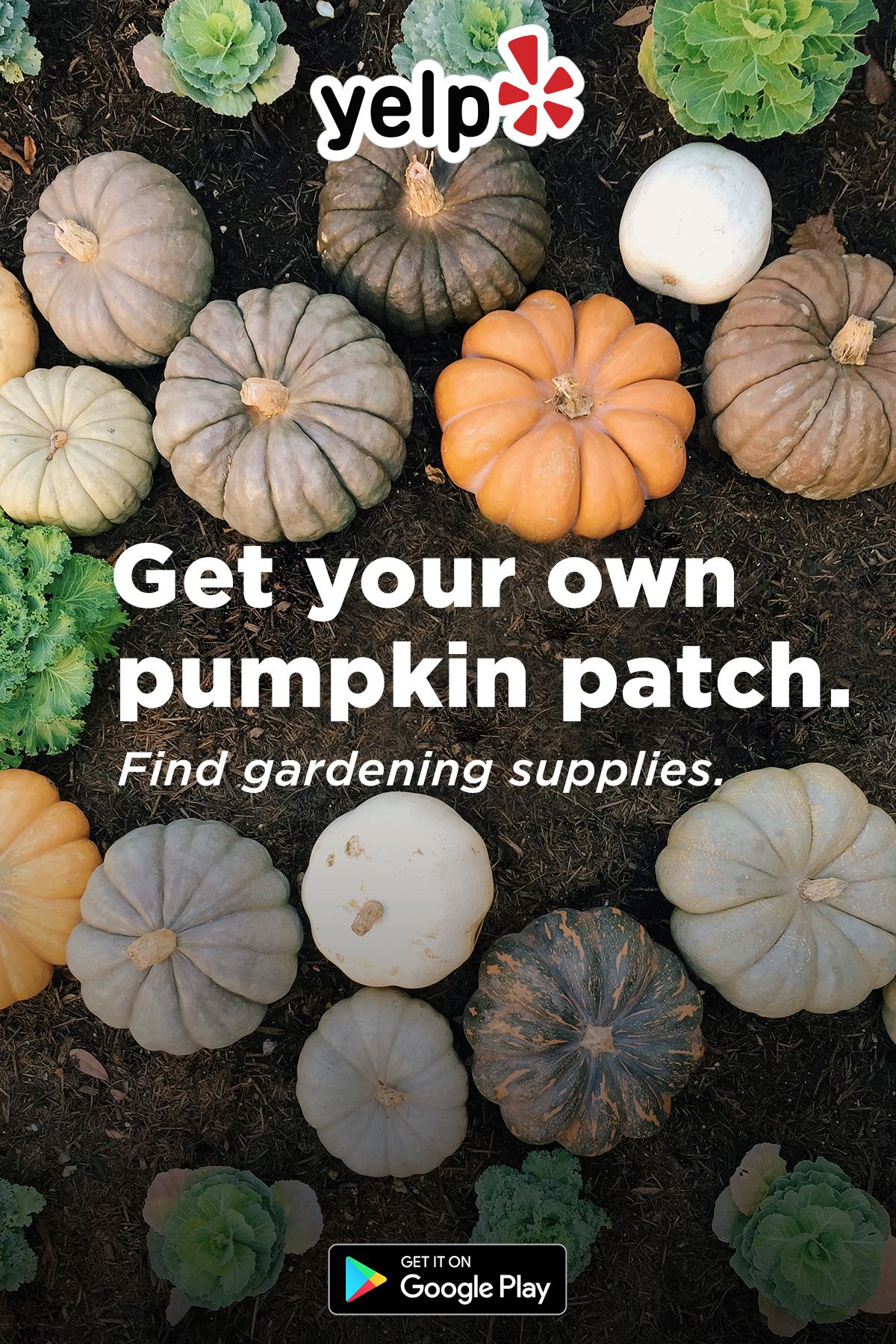 Is your garden ready for fall? Download Yelp to find