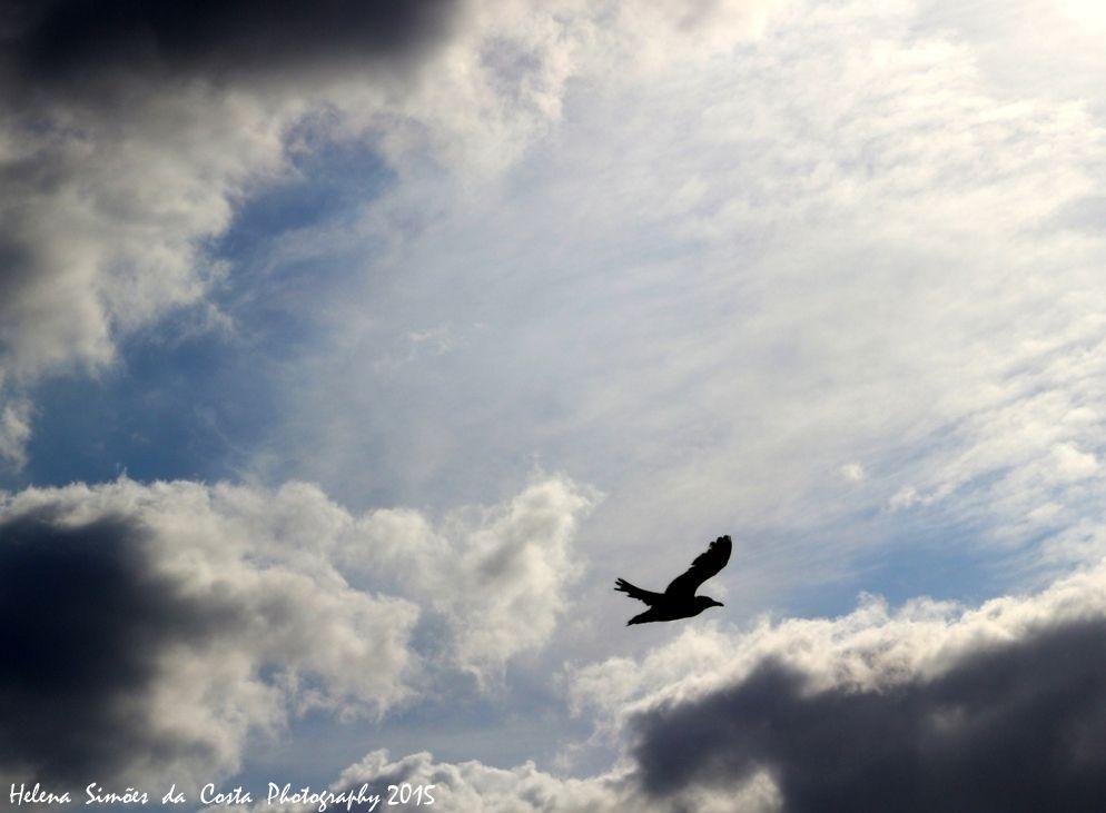 Bird in the Sky, Photo credits by Helena Simões da Costa © 2015 #sky #clouds #birds