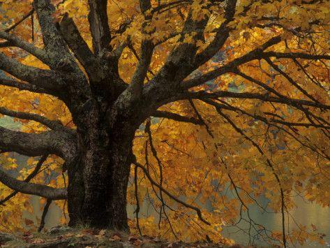 Fall leaves : )