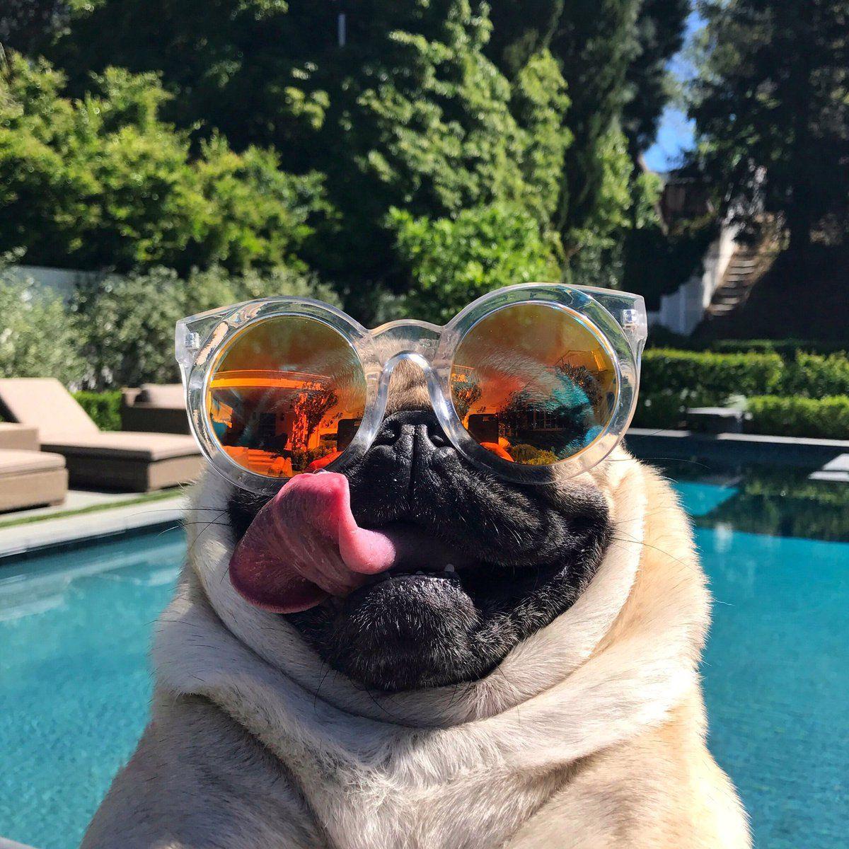 маринованная капуста белый мопс в розовых очках фото тоже