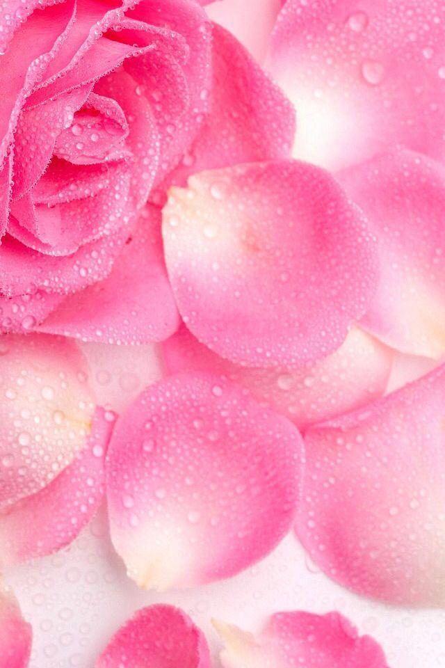 Лепестки.. Прелесть.. | Цветы, Акварельные обои, Розы