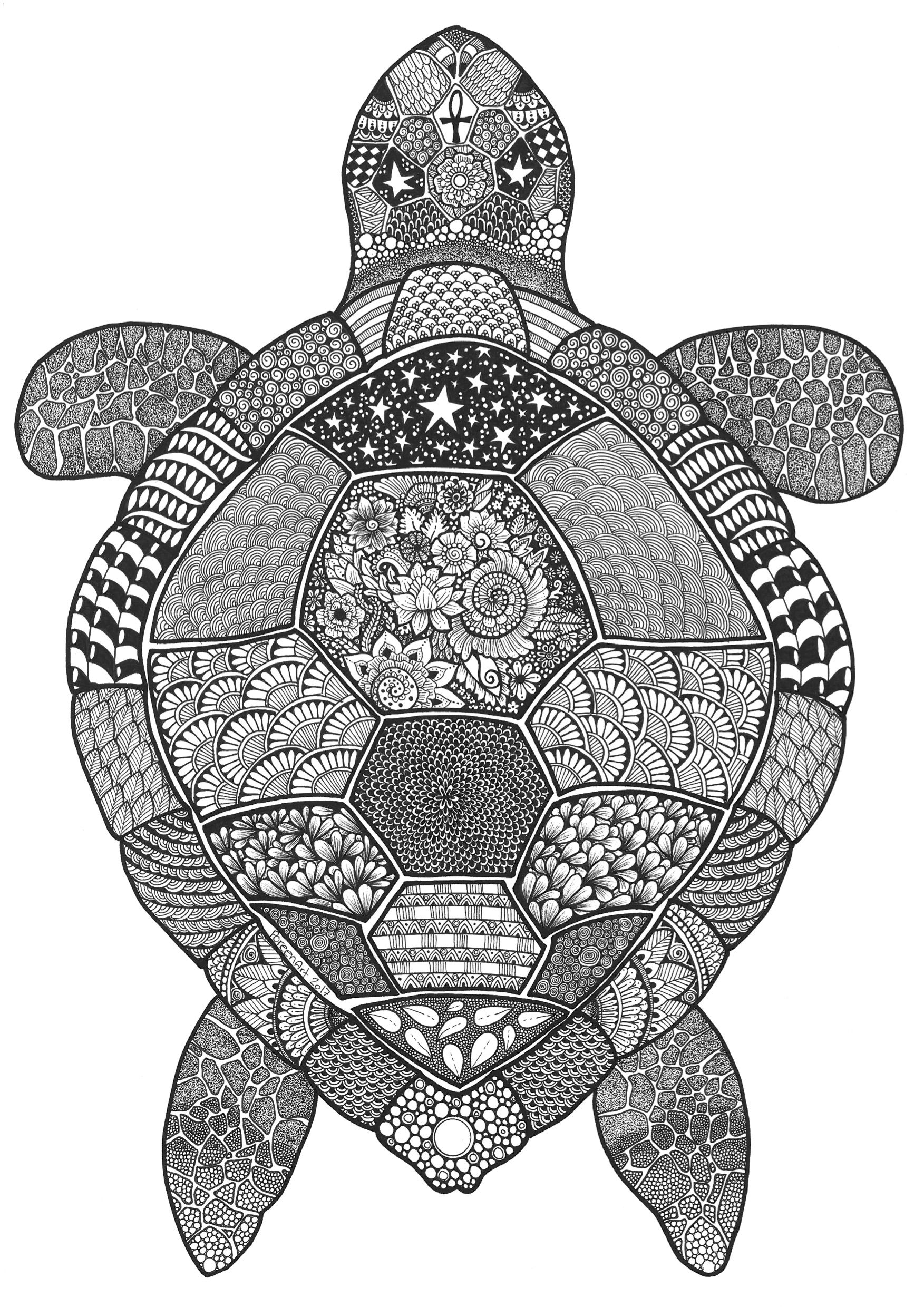 Zentangle Turtle (With images) | Turtle drawing, Turtle ...