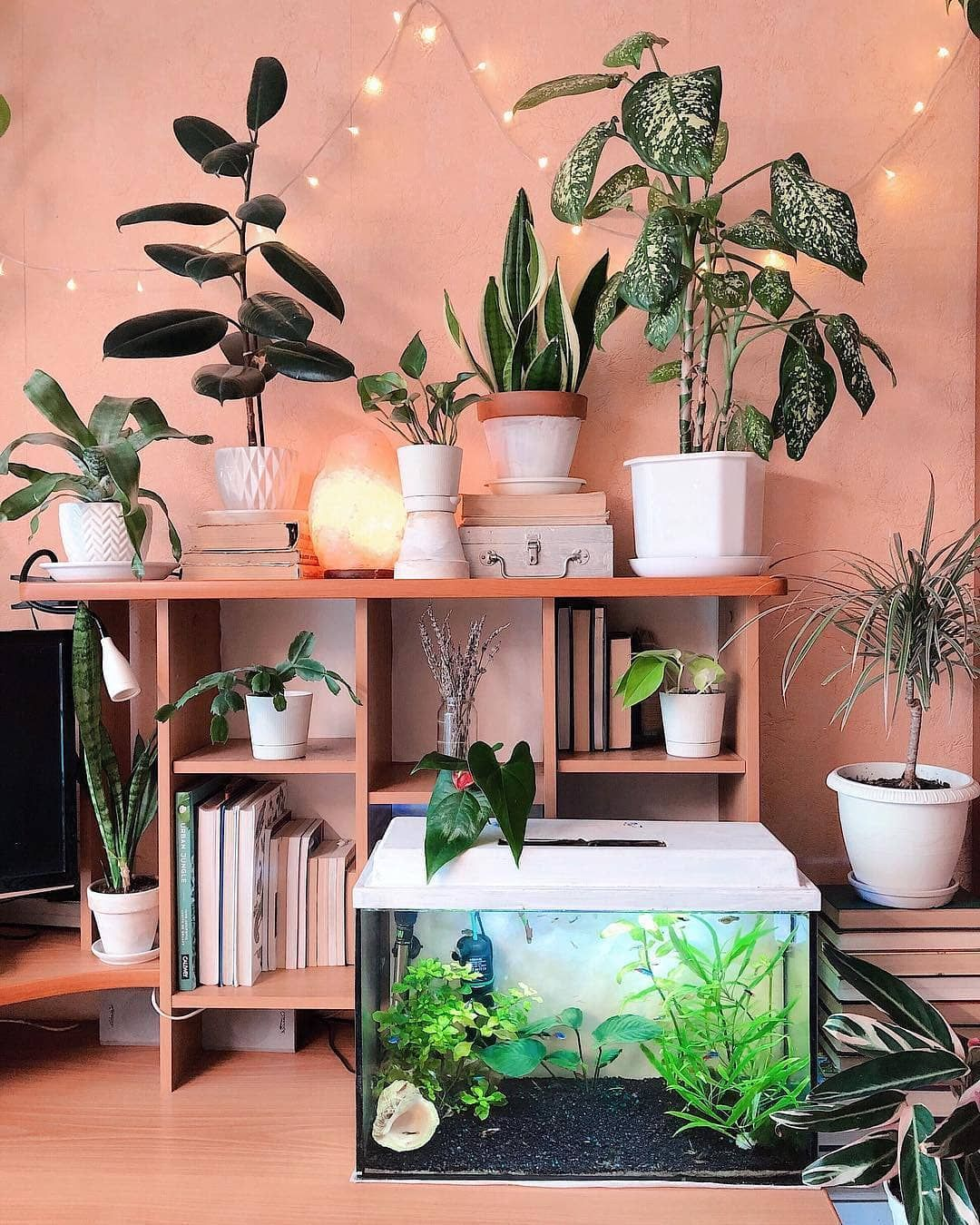 Cozy plant corner😍 Share your thoughts in the comments and ... on Amazing Plant Stand Ideas  id=46189