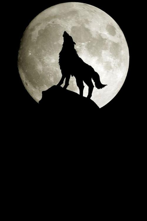 Crepusculo Moon You Lobos Lobo Y Luna Lobo Aullando