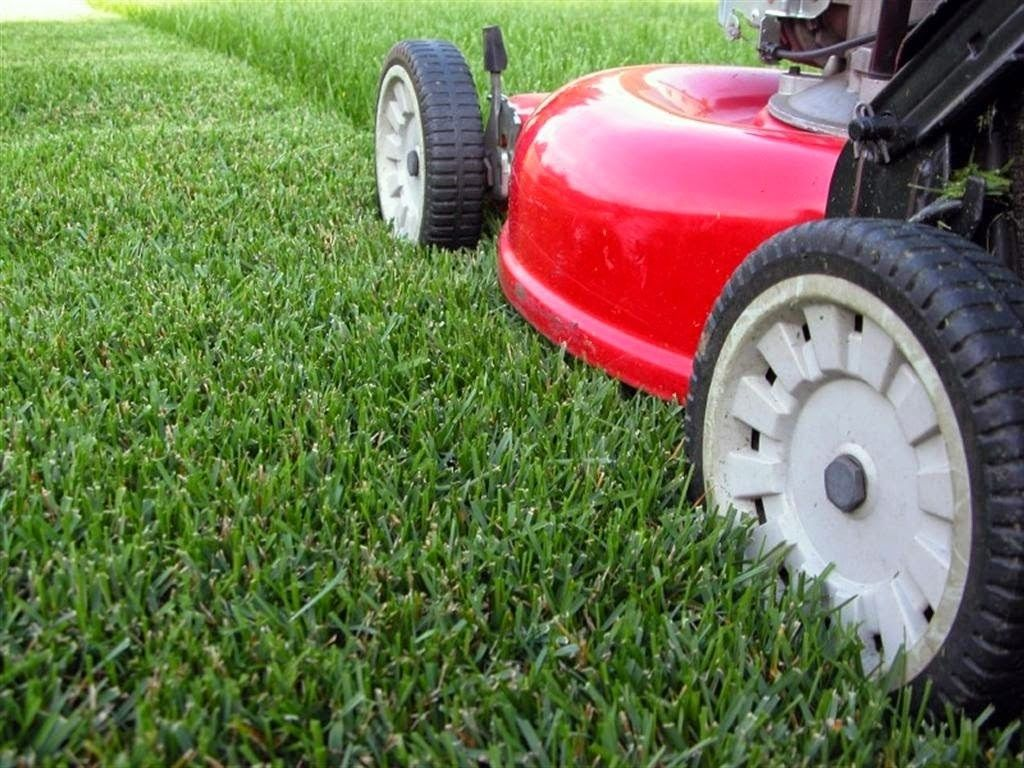 Organic Lawn Care For Beginners