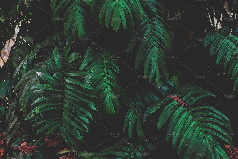 Dark Jungle Leaves Nature aesthetic, Nature, Jungle