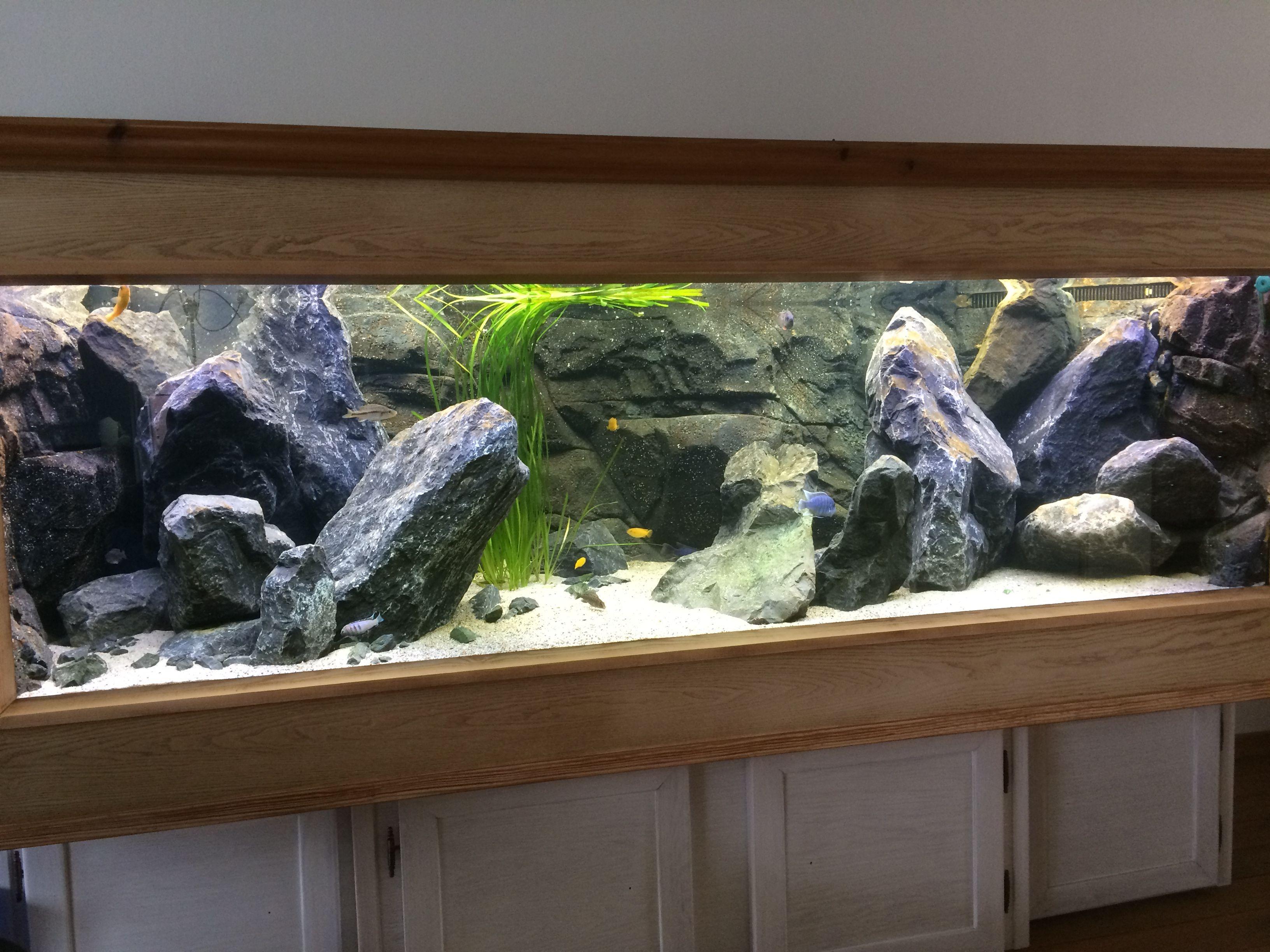 Nieuwe Malawibak Aquarium Pinterest