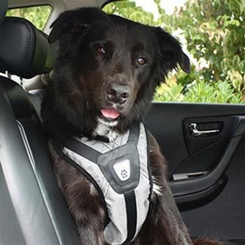Exclusive Dog Car Harness Steel Gray Crash Tested Dog Harness Dog Car Dogs