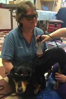 Laser Therapy Laser Therapy Veterinary Clinic Therapy