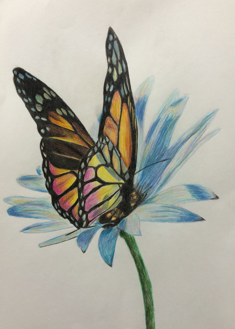 Butterfly And Flower Color Pencils Andrea Meyerholz Flower Art Drawing Pencil Drawings Of Flowers Color Pencil Drawing