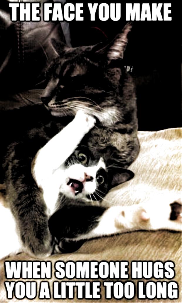 Funny Cat Memes So True Funny Cat Memes Funny Cat Memes Funny Cat Memes L In 2020 Funny Cat Memes Cat Memes Cat Memes Clean