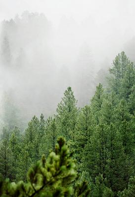 brouillard d'un bois...